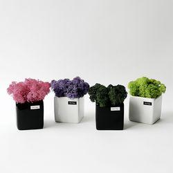 스칸디아모스 화분 6.5cm 자기화분 인테리어 공기정화식물