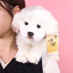 진짜같은 말티즈 강아지인형 25cm