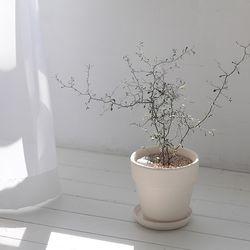 인테리어식물 집들이선물 실내공기정화식물 16종 모음
