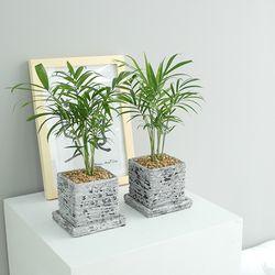 미니 소형 테이블야자 키우기 쉬운식물 반려 식물