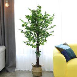 인테리어조화 인조나무 조화화분 킹 벤자민 180