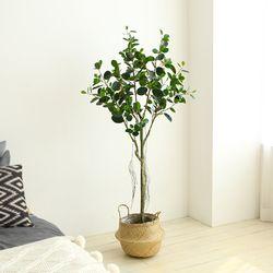 인테리어조화 인조나무 조화화분 용수나무 150