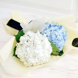 [플플] 수국 화이트+블루 2대 믹스 생화꽃다발