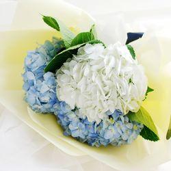 [플플] 수국 화이트+블루 (2대) 3대 믹스 생화꽃다발