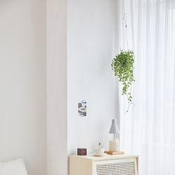 디시디아 그린 공기정화 먼지없는 행잉플랜트 벽걸이식물