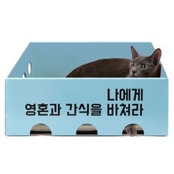 노리노리캣 카펫 스크래쳐 박스 (블루)
