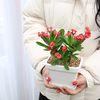 일년 내내 꽃 피는 꽃기린 다육이 다육식물 선인장
