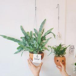 행잉식물 블루고사리 or 후마탄(택1)