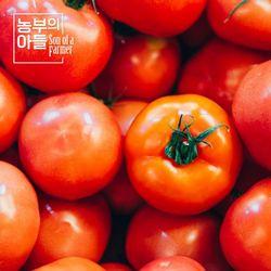 제철과일 완숙토마토 5kg(12번과 2028개)