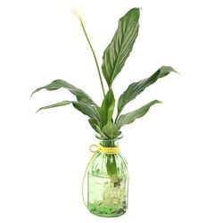 종모양 스파트필름 식물세트
