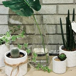 11CM 미니 다육식물