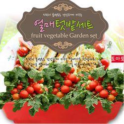 세경팜 열매텃밭세트 식물키우기(방울토마토 피클오이)