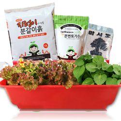 세경팜 고기쌈텃밭세트 식물키우기(상추 들깨 깻잎)