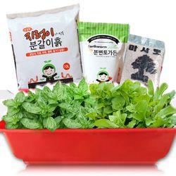 세경팜 허브텃밭세트 식물키우기(스윗바질 루꼴라)