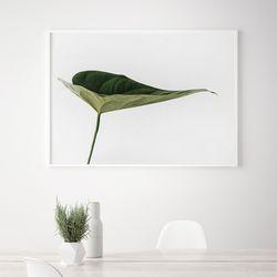 드림몬스테라 식물 액자 A3 포스터+알루미늄액자