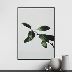모어리프 식물 액자 50x70 포스터+알루미늄액자