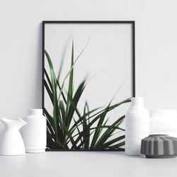 캄그래스 식물 액자 A3 포스터