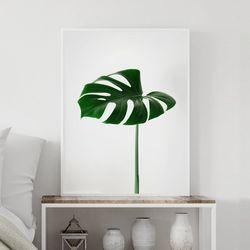 싱글몬스테라 식물 액자 A3 포스터