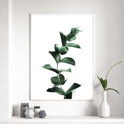 싱글유칼립투스 식물 액자 A3 포스터