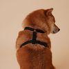 강아지 하네스 H형 가슴줄 (4color)
