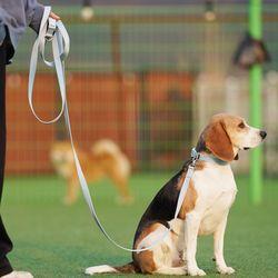 강아지 리드줄 3미터 (4color)