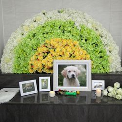 몽몽이 펫슈랑스 장묘이용권  반려동물 장례 수목장