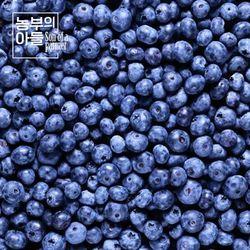제철과일 블루베리1kg(100gx10팩)