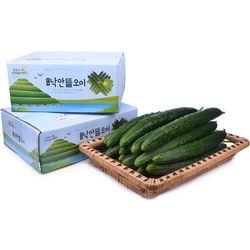 남도의 꿈 낙안뜰오이 취청 선별 특 50개(10-12kg)