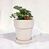 플라랜드 공기정화식물 인테리어 딸기나무 화이트토분