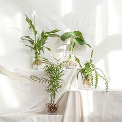 공기정화식물 인테리어 수경식물 4종 모음전 화병선택
