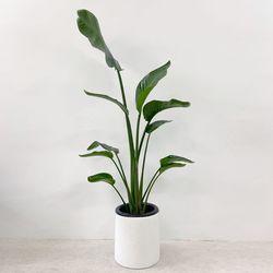 플라랜드 공기정화식물 중대형 여인초 극락조 테라조 화분