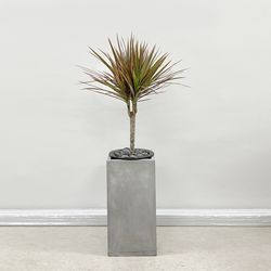 공기정화식물 키우기쉬운식물 레인보우 마지나타 시멘트 화분