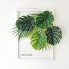 투명 식물 인테리어 액자 - 몬스&야자 A3사이즈