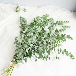 플플 공기정화식물 유칼립투스 블랙잭 1단