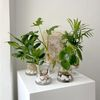수경재배식물 DIY 모음전