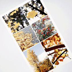 단풍 가을 사진 다꾸 인스 인쇄소스티커