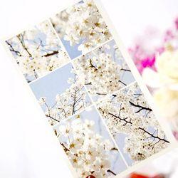 봄날 벚꽃 사진 다꾸 인스 인쇄소스티커
