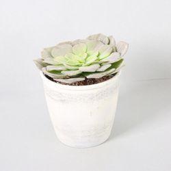 다육식물 다육이 미니화분 아가베가지 20cm