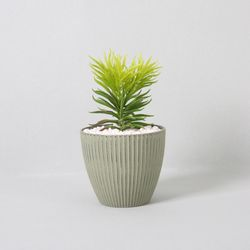 다육식물 다육이 미니화분 미니파인스프레이 25CM