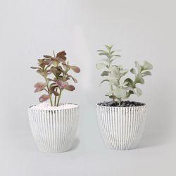 다육식물 다육이 미니화분 칼랑코이36cm