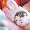 강아지 고양이 애견 토끼 모자