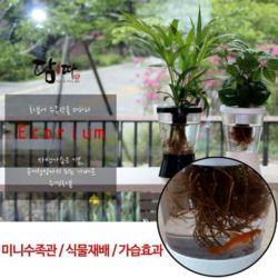 에코리움 수족관 화분 수경재배 인테리어 미니 화분
