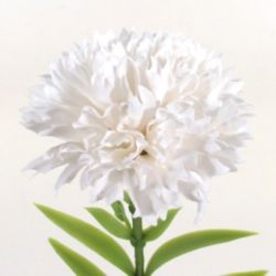 BN 화훼용품 비누카네이션(중)-백색