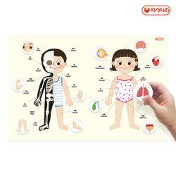 자석이 붙는 인체 포스터 (나의 몸) (40x60) -학습벽보-병원놀이