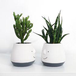 스마일화분(S)+키우기 쉬운 식물
