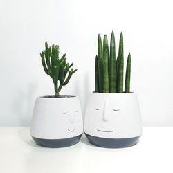 스마일화분(L)+키우기 쉬운 식물