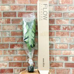 실내공기정화식물 몬스테라 (3잎 1세트)