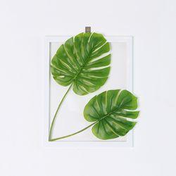 그리너리 몬스테라 식물액자 인테리어 투명아크릴액자
