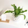 수경재배 공기정화식물 유리병세트-아비스