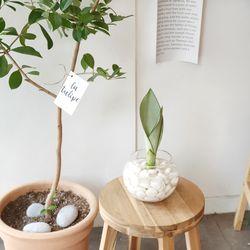 수경재배 공기정화식물 유리병세트-문샤인